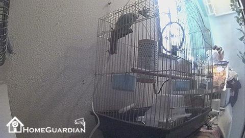 時計型カメラ実際の広角画像